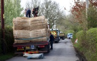Thatching reeds unloading 2