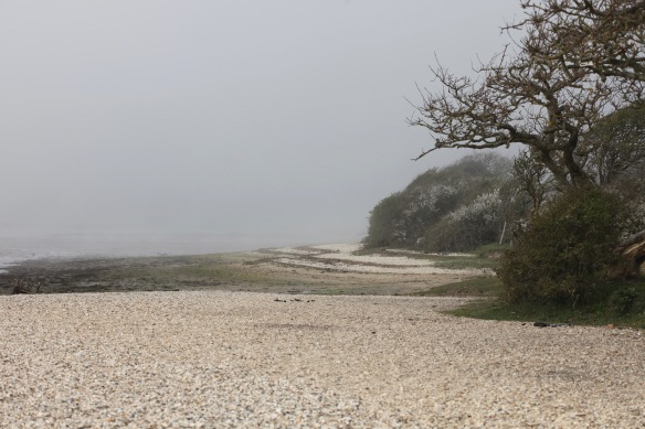 Shore in mist