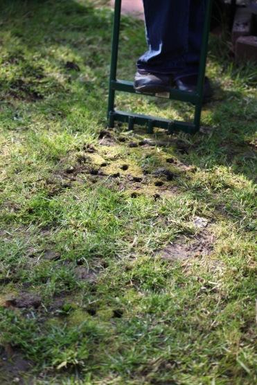 Jackie aerating grass 2