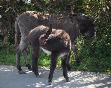 Donkey and foal 2