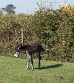 Donkey foal 3