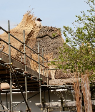 Thatching progress 6
