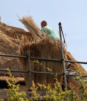 Thatching progress 9