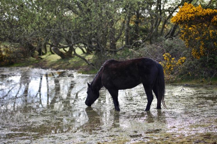 Pony in pool
