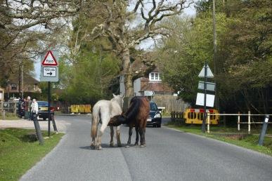Ponies in road 1