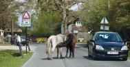 Ponies in road 2