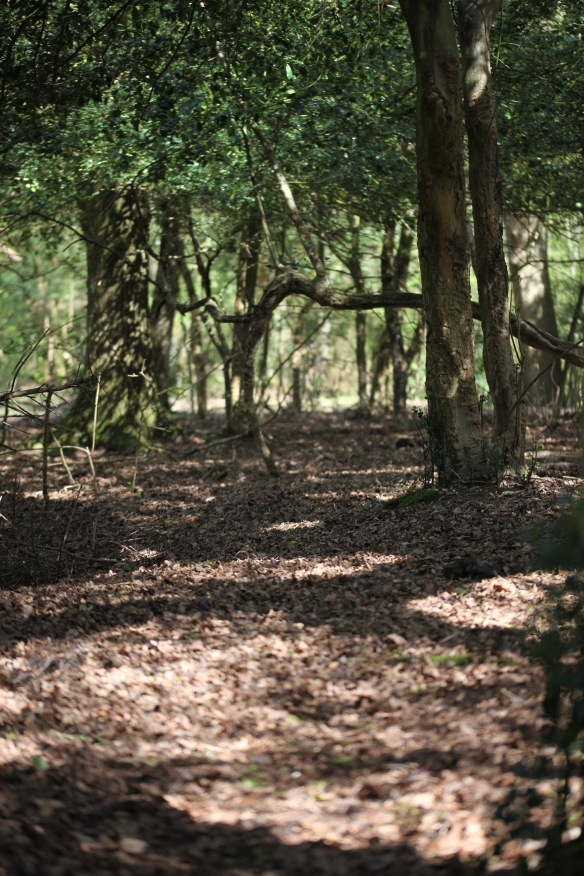 Tree shadows 2