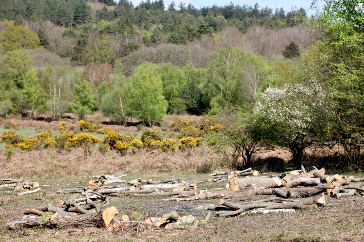 Logs, gorse, trees 1