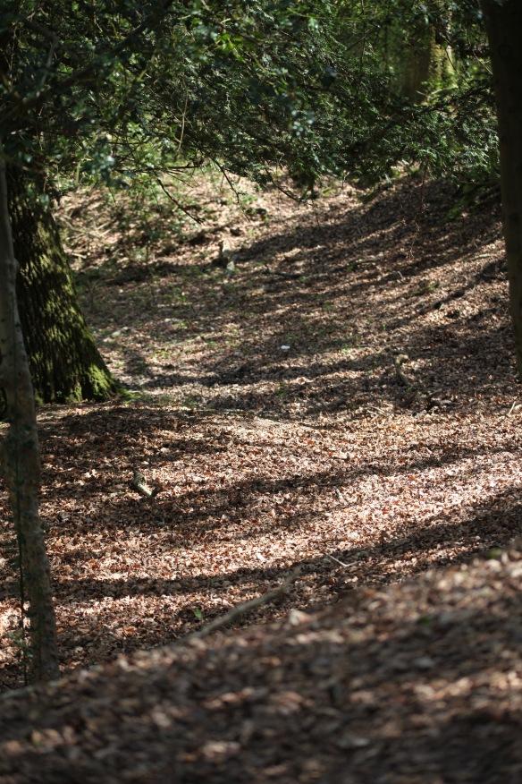 Tree shadows 3