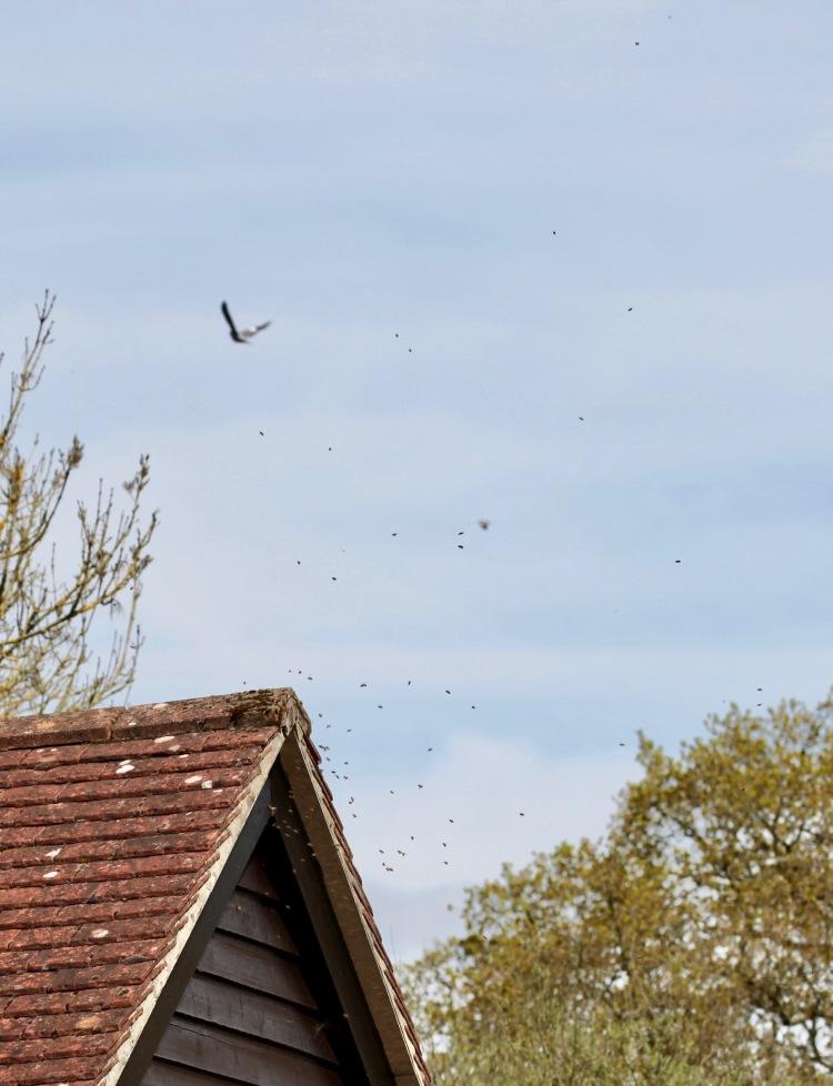 Wasps' nest 1