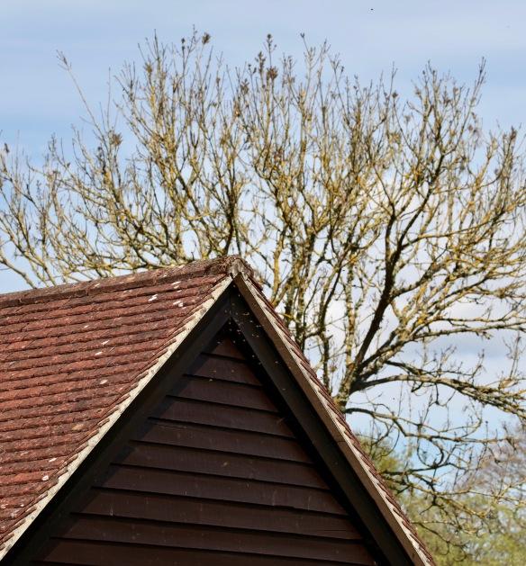 Wasps' nest 2