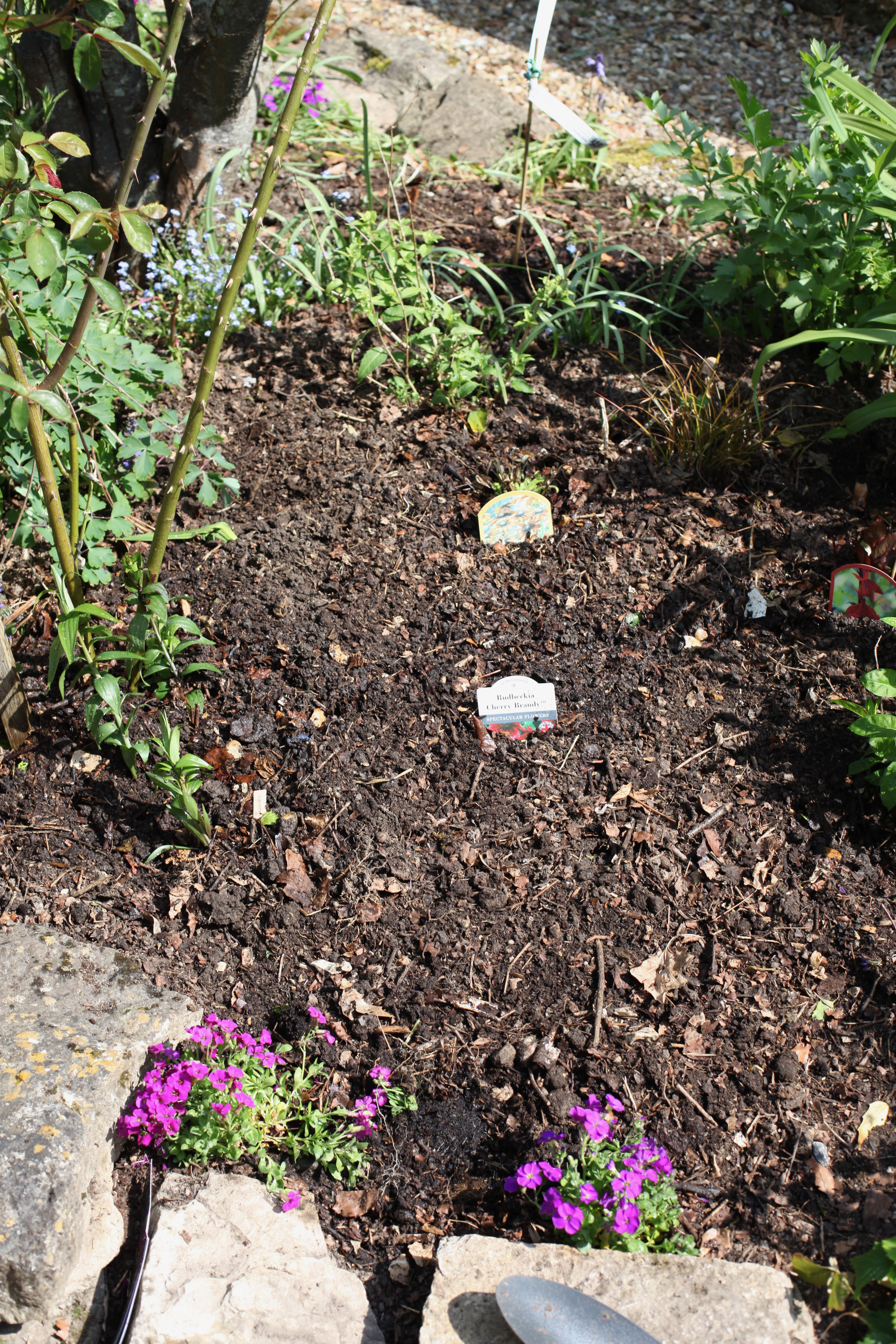 Planting in Oval Bed 1
