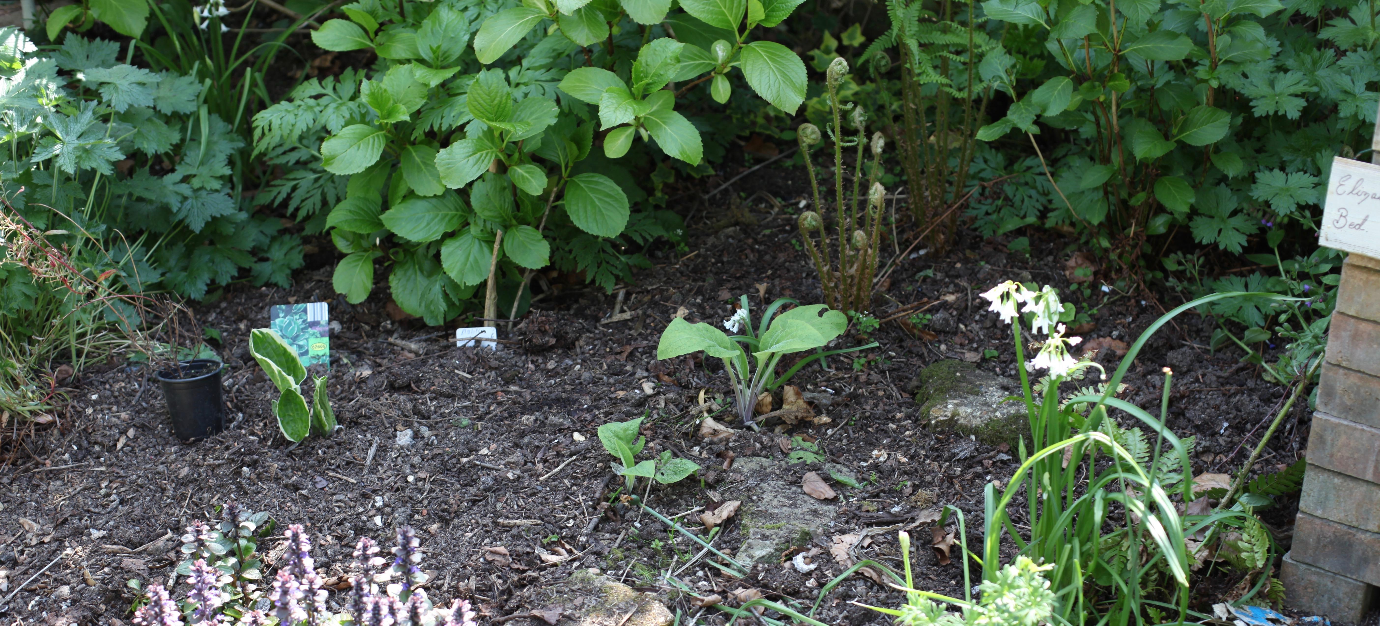 Planting in Elizabeth's Bed 1