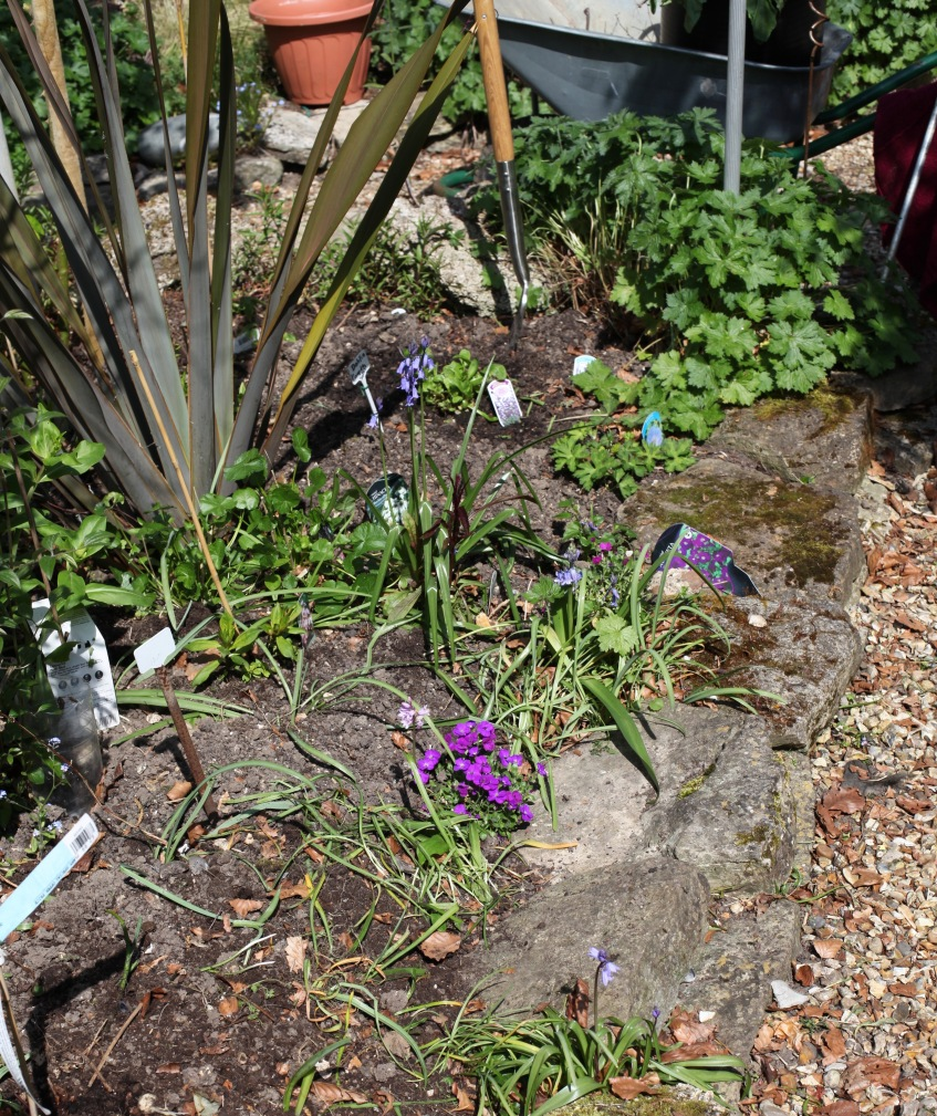 Planting in Oval Bed 2