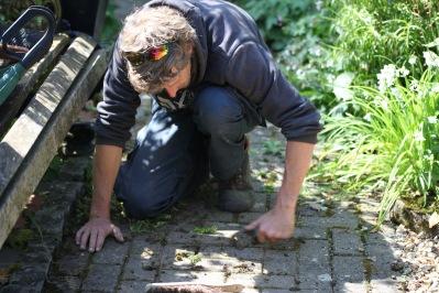Aaron weeding brick path 1