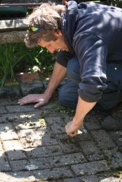Aaron weeding brick path 2