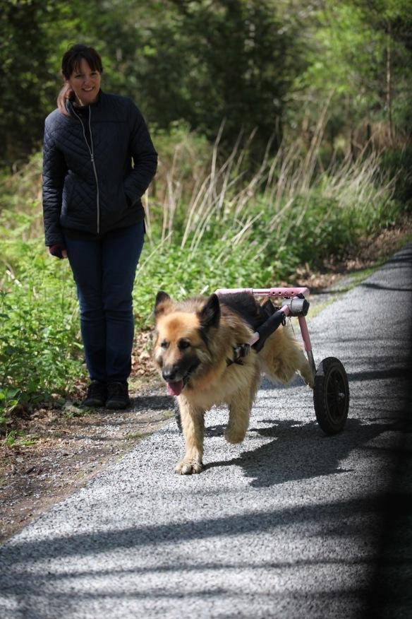 Dog on walker