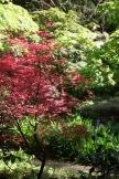 MacPenny's garden 6
