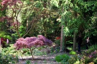 MacPenny's garden 9