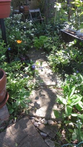 Head Gardener's Walk 2