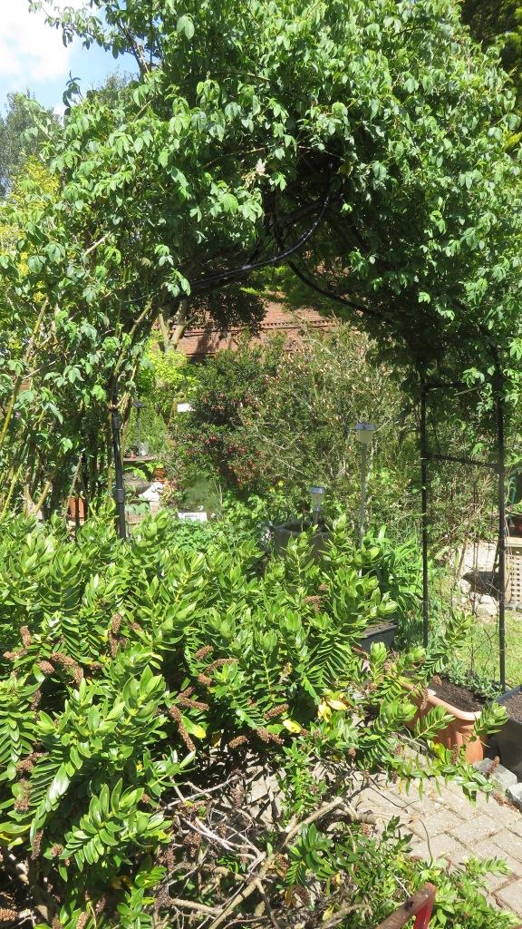 Garden view through Agriframes Arch