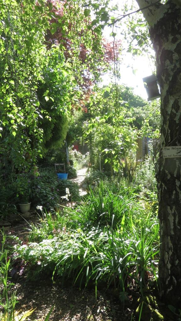 Garden view along Heligan Path