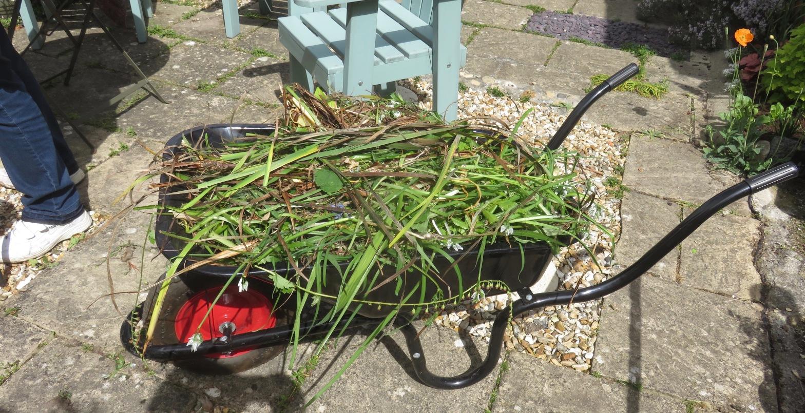 Wheelbarrow loaded with weeds