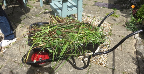 Wheelbarrow loaded with weeds
