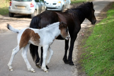 Mare and foal 1