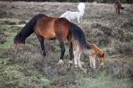 Mare and foal 7