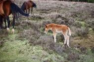 Foal 2