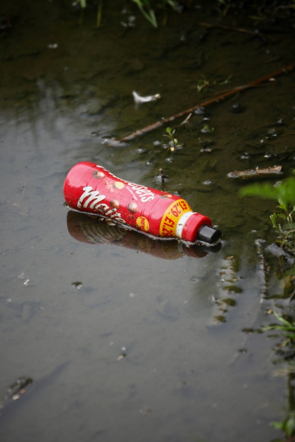 Maltesers in lake