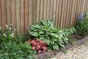 Hosta, heuchera, alliums