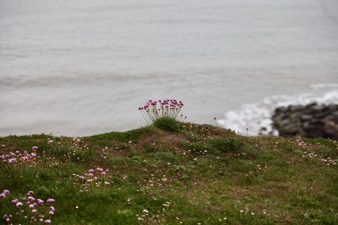 Thrift on clifftop 3