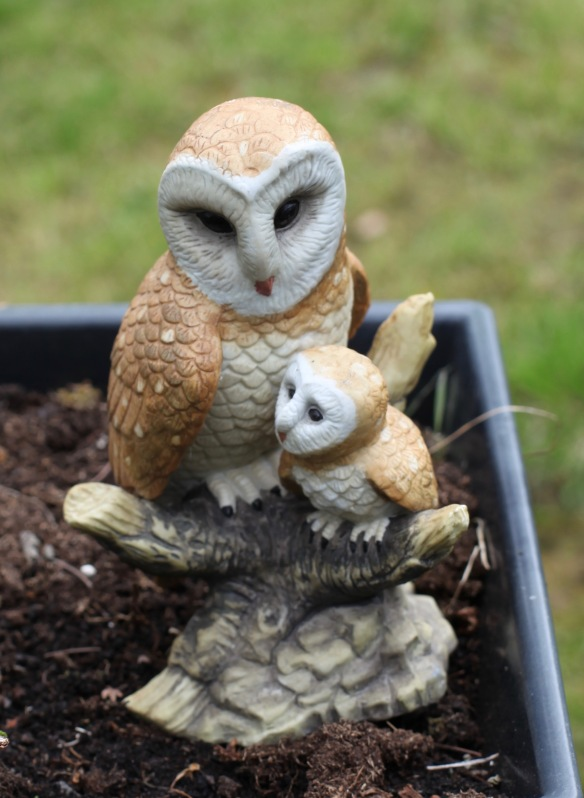 Owl and owlet