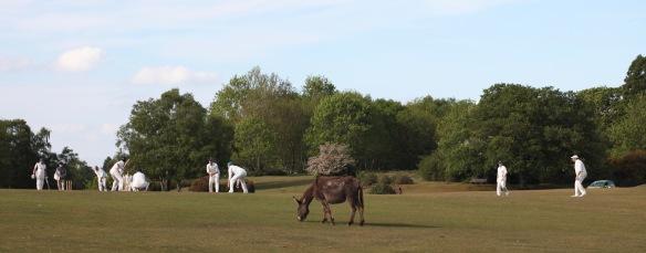Cricket and donkey