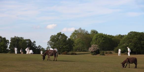 Cricket and donkeys 1