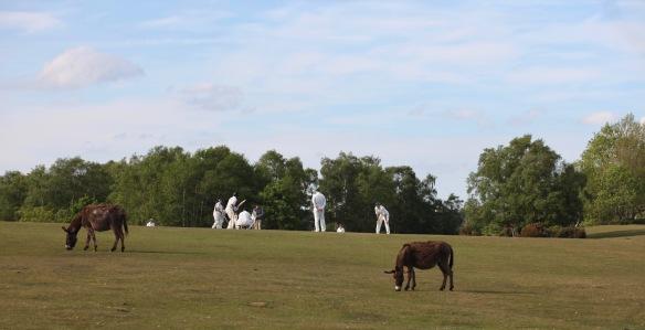 Cricket and donkeys 2