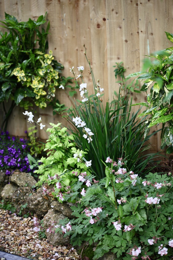 Libertia, geraniums Ingwersen's Variety, campanulas