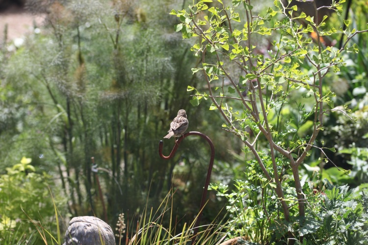 Sparrow on hook 1