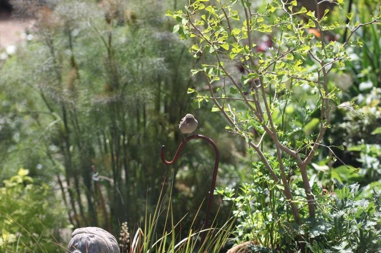 Sparrow on hook 2