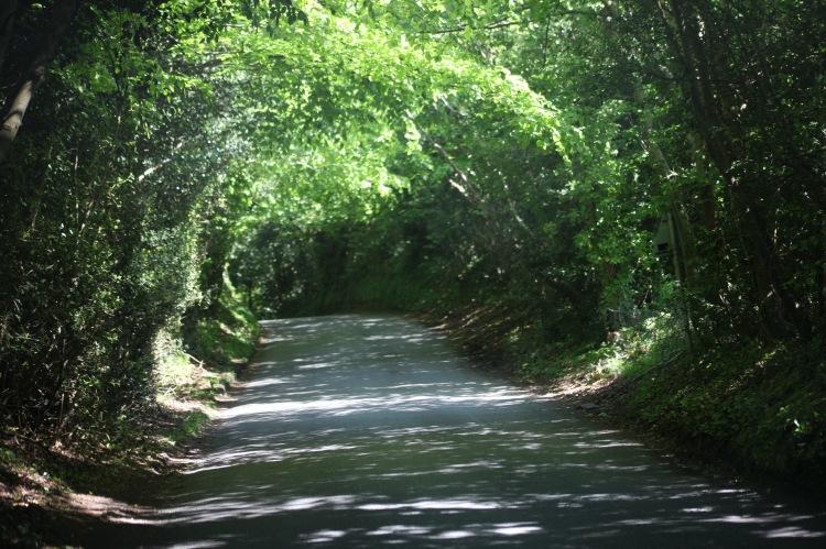 Mount Pleasant Lane