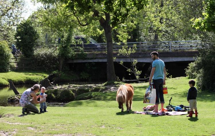 Pony and family 1