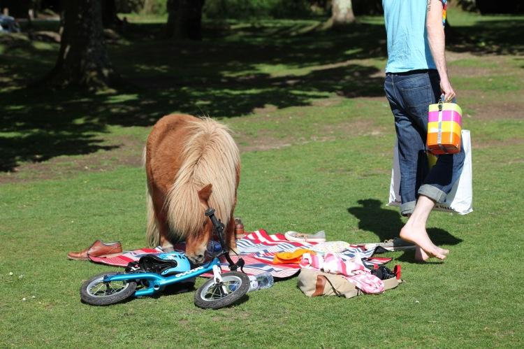 Pony and bare feet