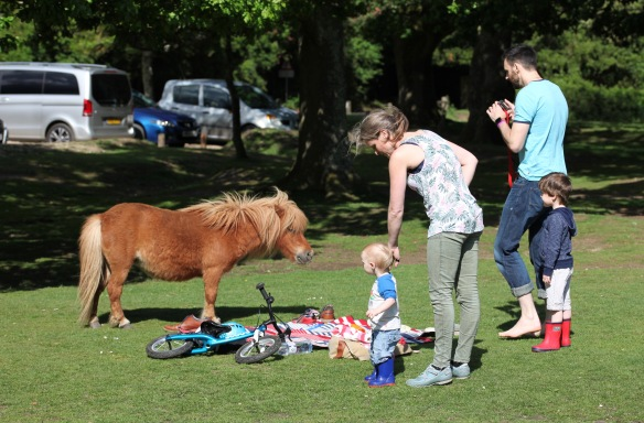 Pony and family 2