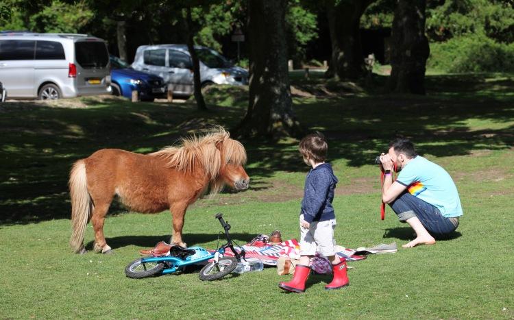 Pony and photographer