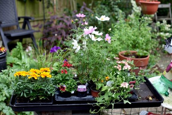 Plants for potting 1