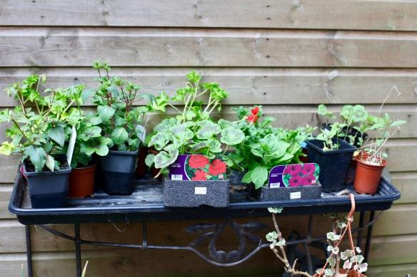 Plants for potting 2