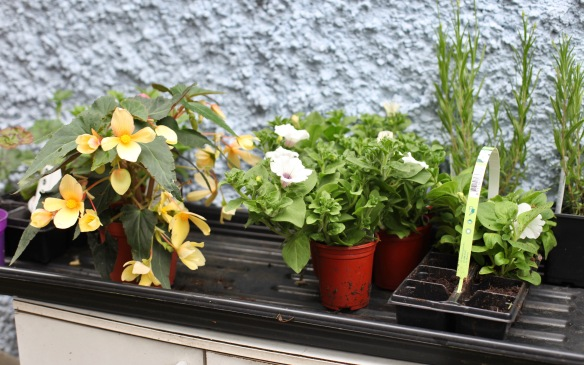Plants for potting 3
