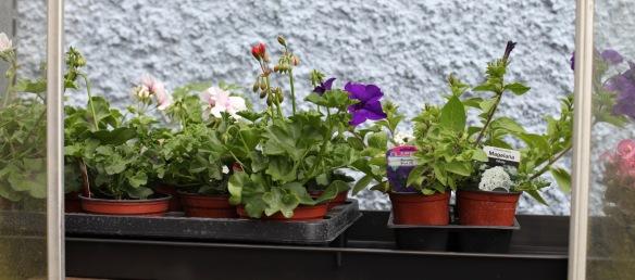 Plants for potting 5
